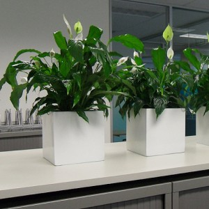 Green Ideas Best Indoor Plants For The Office