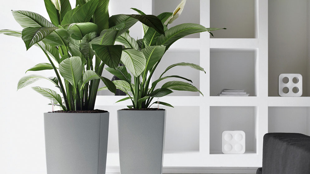 Indoor plant hire office plants indoor plants online for Low maintenance office plants