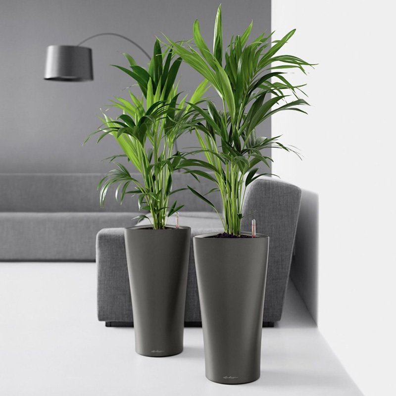 Office Plants Can Also Improve The Moods Of Employees And Even Cut Down On  Them Chucking Sickies, Therefore Improve Productivity. Large Floor Displays  Turn ...