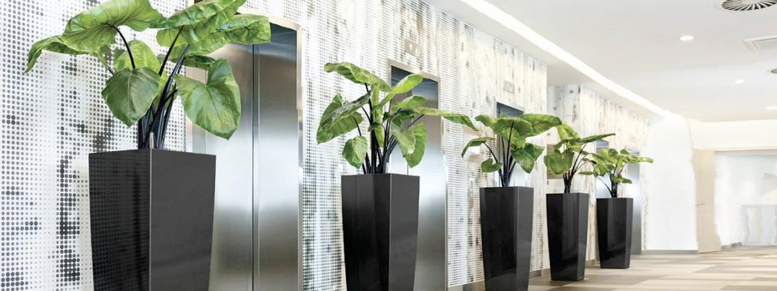 Indoor plant hire office plants indoor plants online for Low maintenance plants for office