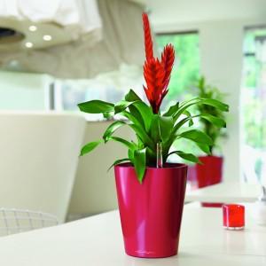 Pot Plant Hire